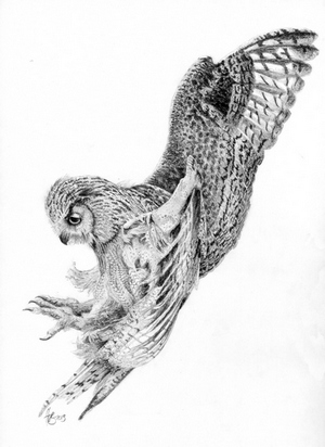 Flying owl pencil drawings - photo#11